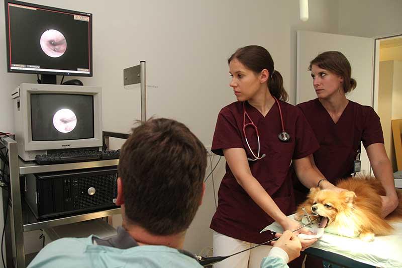 Endoskopie-Neuerer
