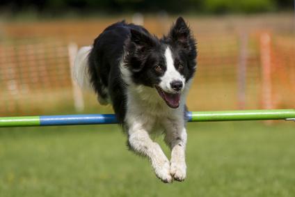 """Physiotherapie In Der Zeitschrift """"Der Hund"""""""