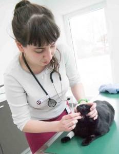 Medikamentengabe bei der Katze