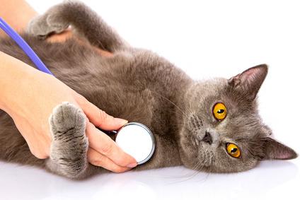 hören katzen ultraschall maeusevertrieber
