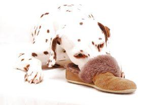 Pantoffel als Welpenersatz
