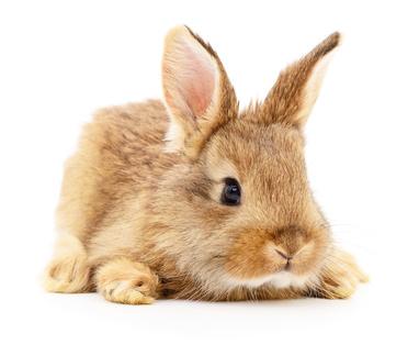 Impfaktion Gegen Kaninchen-Virus