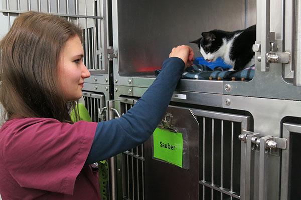 Ausbildung In Der Tierklinik: Carolin Gienger Hat Ein Großes Herz Für Tiere