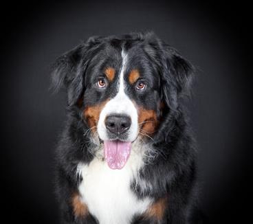 Epilepsie Bei Hunden Symptome Und Therapie