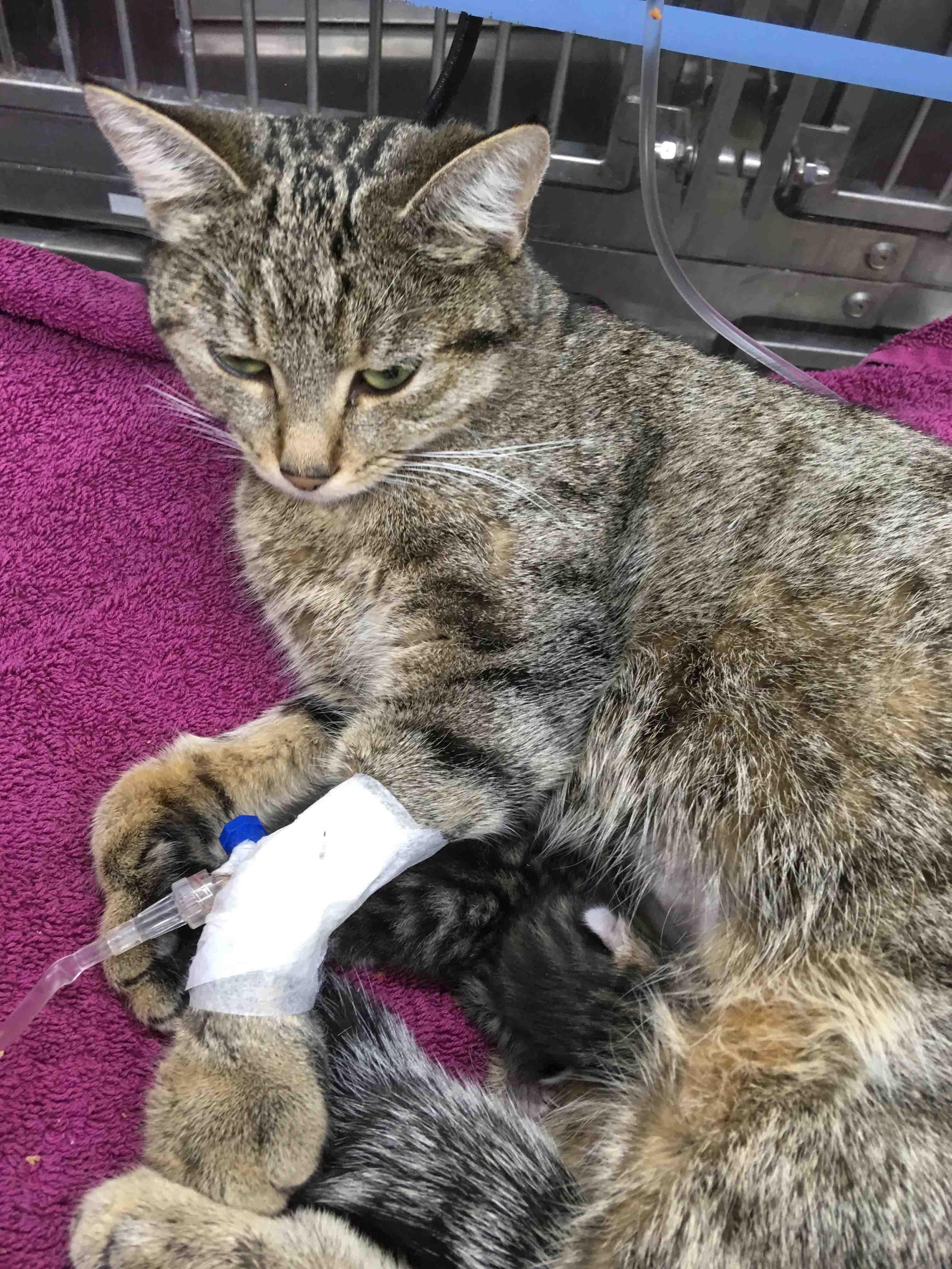 Gerettet: Katzenmutter Und Welpe.