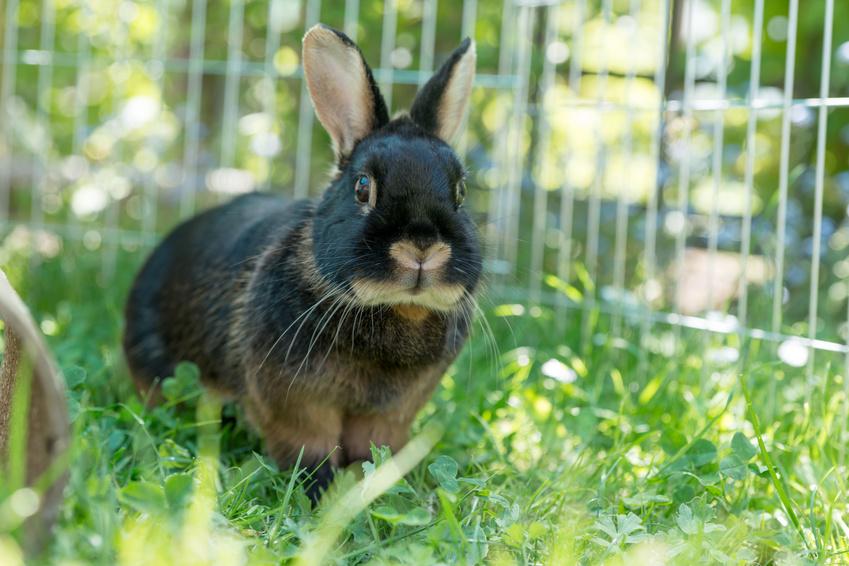 Kaninchen – Artgerechte Fütterung