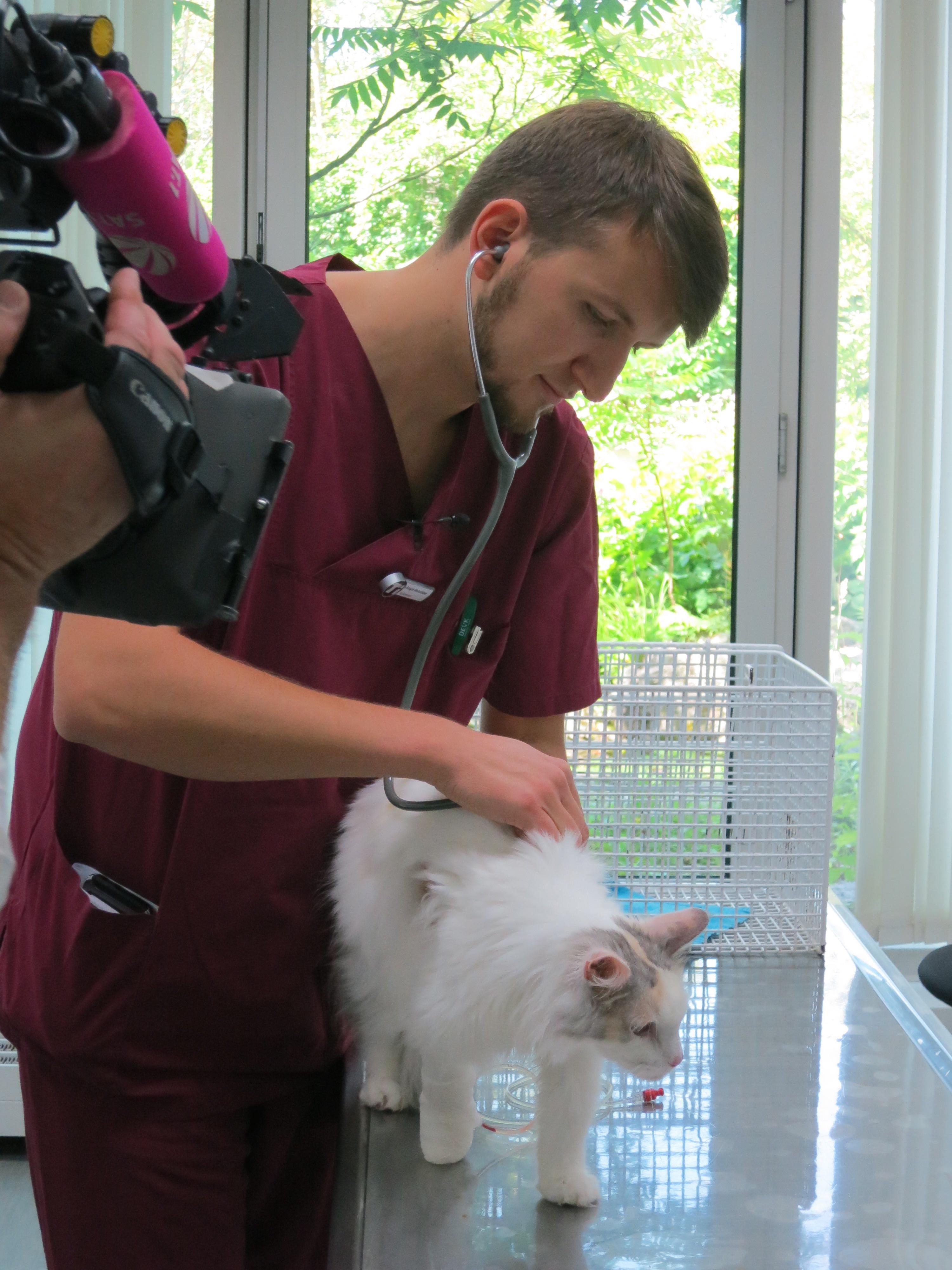 Tierarzt Christoph Monschein Checkt Den Gesundheitszustand Der Abgemagerten Katze.