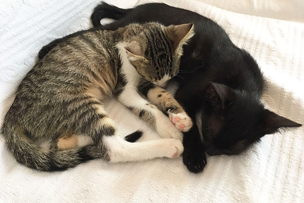 Neues Zuhause Für Katzenwelpen Gesucht